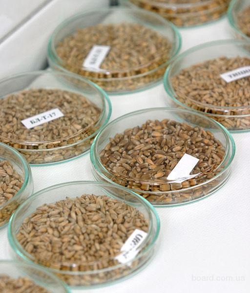 Доступное зерно от производителя