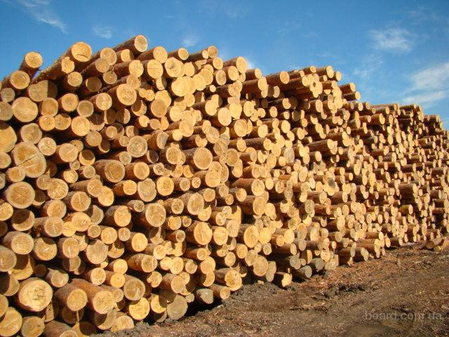 Продажа леса-кругляка