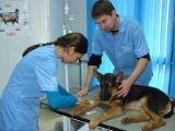 Круглосуточная ветеринарная помощь в Киеве.