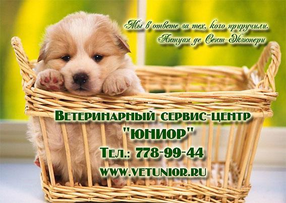 Ветеринарная клиника ул молодцова 21