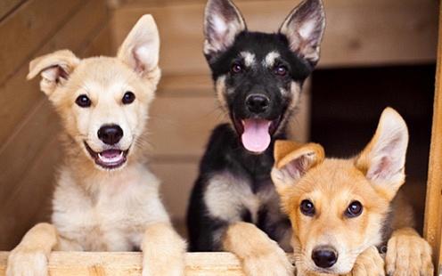 Приют для животных в Украине ждет твоего участия на PetHelp