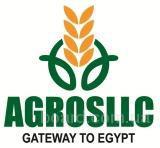 Фрукты и овощи из Египта