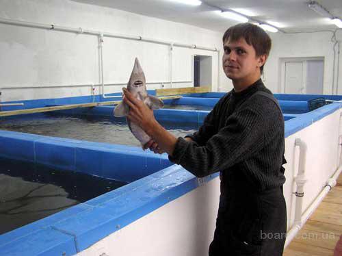 Созданием на базе учебно-опытного рыбоводного хозяйства вуза первого малого инновационного предприятия вплотную...