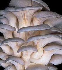 ...и шампиньонов b в/b b домашних/b b условиях/b. белые грибы купить.