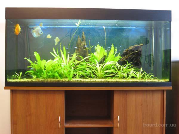 Продам аквариум 500 л. с тумбой и светильником - продам.купить Продам аквариум 500 л. с тумбой и. Харьков, Украина. Фото