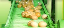 Лента транспортерная для яйцесбора