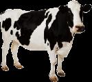 Услуги по выращиванию продуктивного скота от ЦЗРС