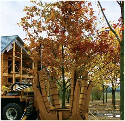 Деревьев посадка деревьев