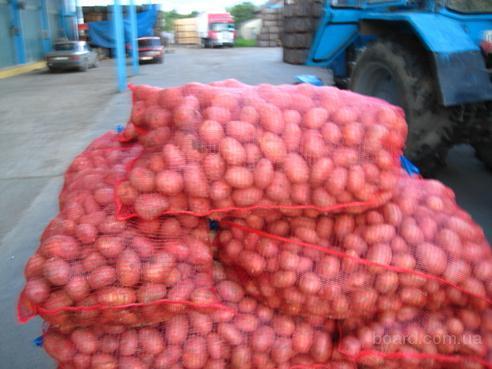 Продажи оптом овощей и фруктов по Украине.  Картофель опт из Закарпатья - фото 1.