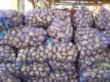 Картофель оптом Украина, продам картофель оптом