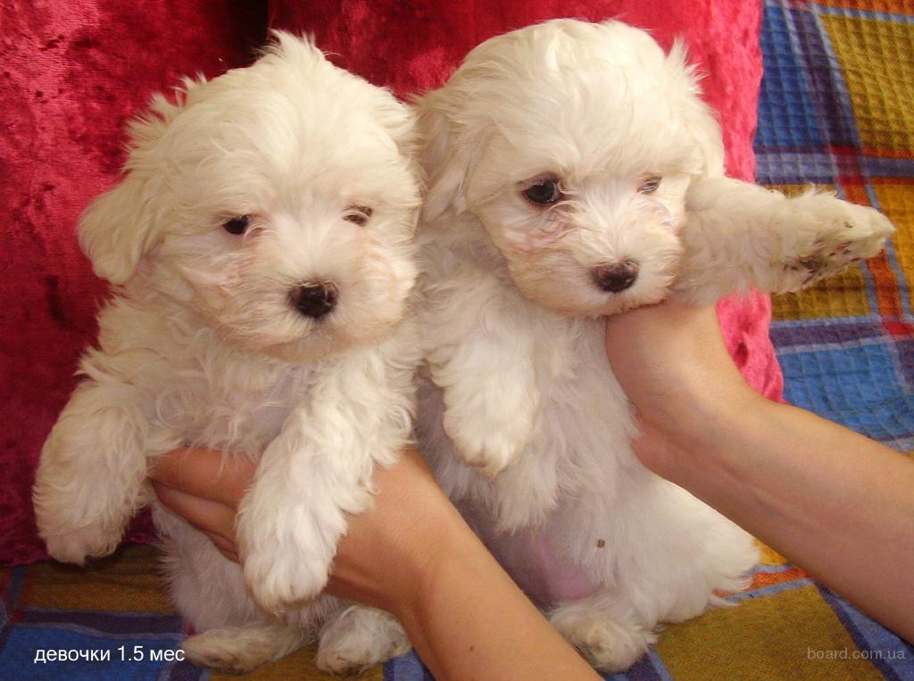 Купить собаку или щенка Продажа собак в Белгороде на