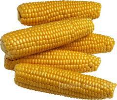 Продажа семян подсолнечника и кукурузы от производителя