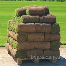 Купить, продажа рулонный газон, Киев, цена 30,00гр