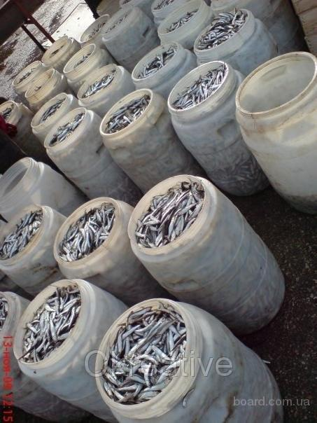 Продает соленную, копченую, вяленую и мороженную рыбу (бычок, тюль…
