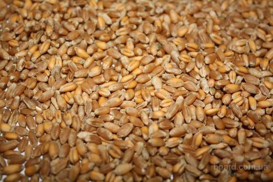 продажа импортной кукурузы: