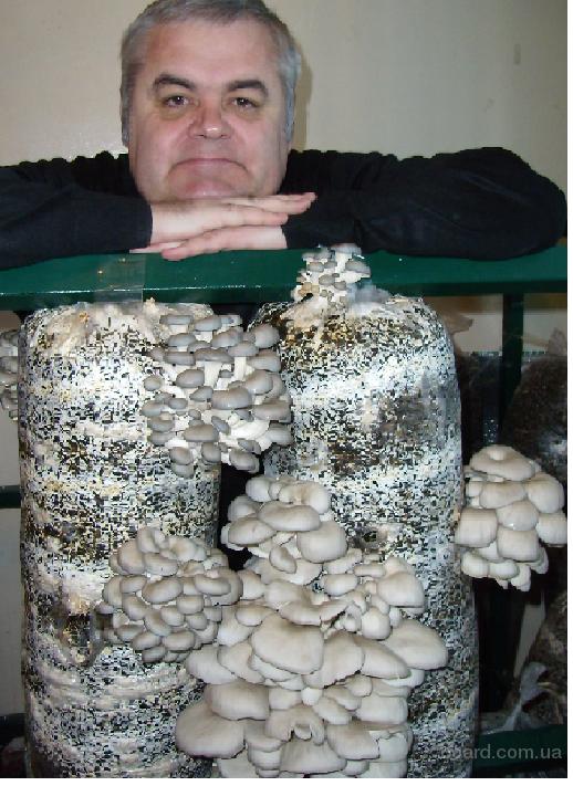 Мицелий грибов.
