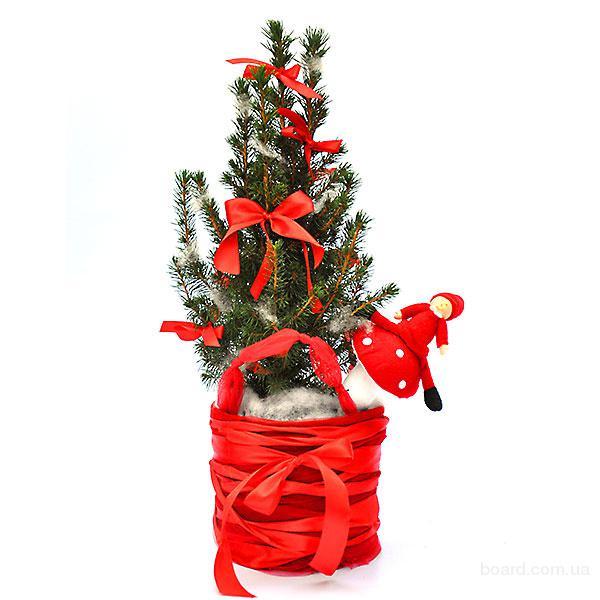 Новогодние подарки, композиции с живыми цветами и елочками