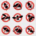Дезинсекция и дератизация, газация, уничтожение тараканов, блох,клопов