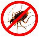 Уничтожение тараканов, клопов, блох, клещей, в Крыму, дезинсекция