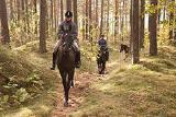 Прокат лошадей, конные прогулки в Черкассах.