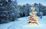 Новогодняя и Рождественская магия Карпат