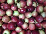 Продажа яблок от производителя от 6,5 грн.