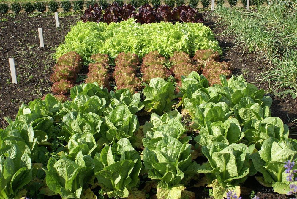 Свежие овощи круглый год!