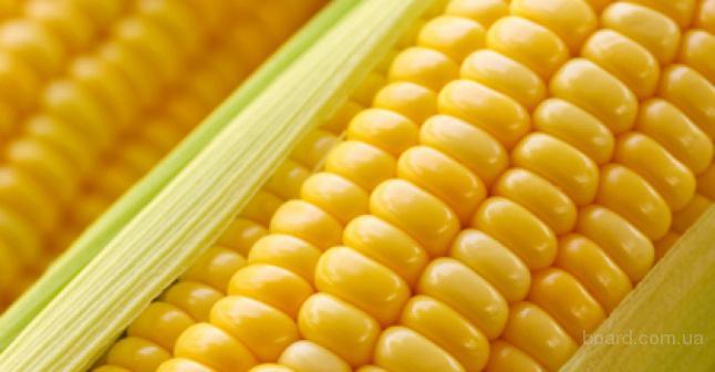 Реализуем семена подсолнечника, кукурузы, рапса озимого и ярового.