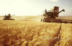 Ищу инвестора для сельхозпроизводства