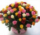 Роза Украинского производства оптом Цветы для Вашего бизнеса