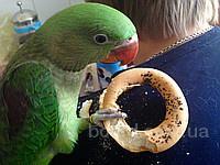 Все для попугаев. Продажа - Попугаи, Клетки, Вольеры, Корма для попугаев.