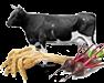 Сельхозпродукция, животные, растения